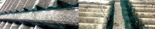 Barreras contra plagas